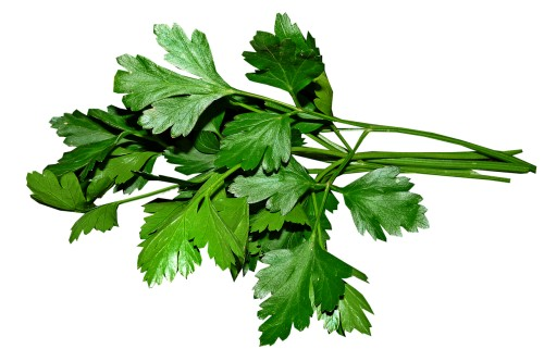 parsley-3622868_1280.png